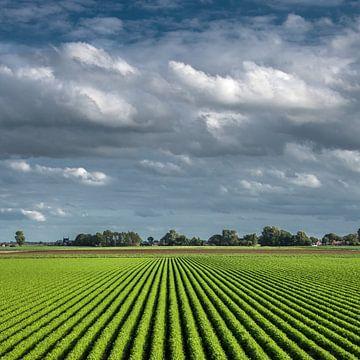 Landbouw met strakke lijnen langs de Bildtdijk van Harrie Muis