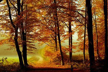 Verträumte Wälder von TJ Cuperus