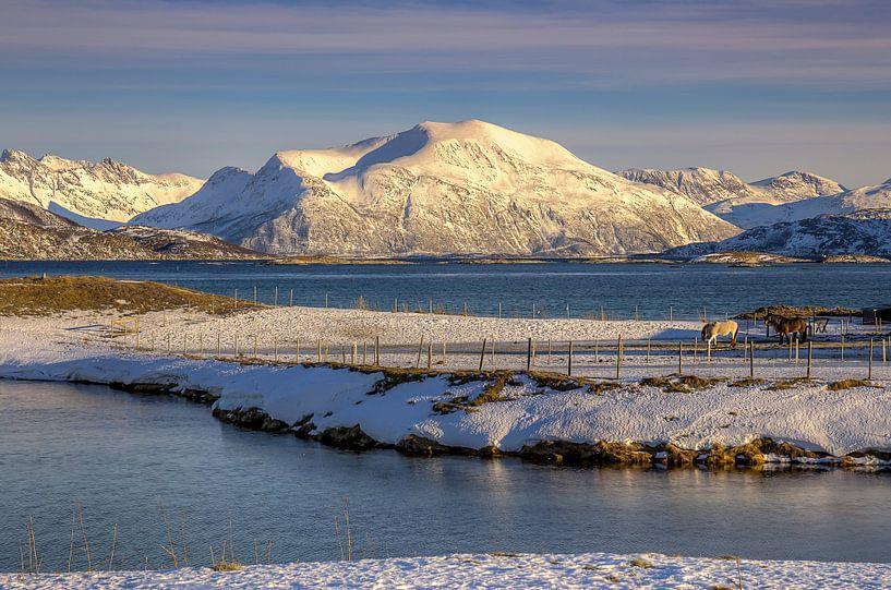 Sommarøya in Winter, Noorwegen van Adelheid Smitt