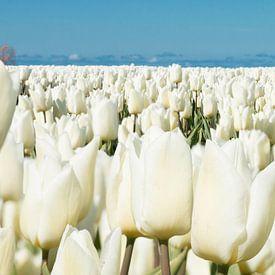 Het witte Hoogeland van Astrid Ingrid Wevers