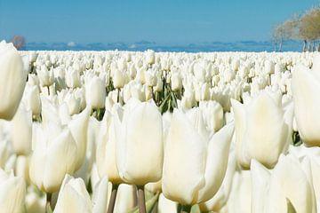 Weißes Hochland von Astrid Ingrid Wevers