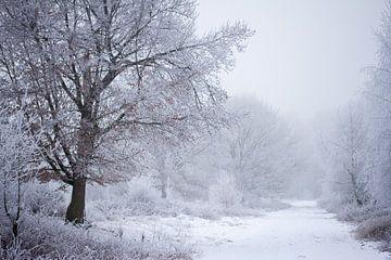 Winterwaldweg unter einer Schneedecke von Karijn Seldam