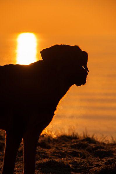 Hond in ochtendzon van Erik van Riessen