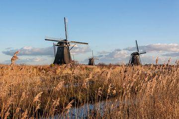 De molens van Kinderdijk omgeven door riet van Stephan Neven