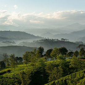 Panorama Theeplantage Java, Indonesië van Ellis Peeters