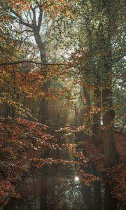 Schilder het bos