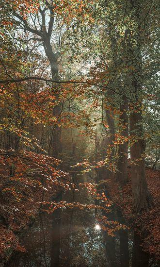Schilder het bos van Joris Pannemans - Loris Photography
