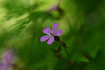Wildblumen im Wald von RW Blitzlicht