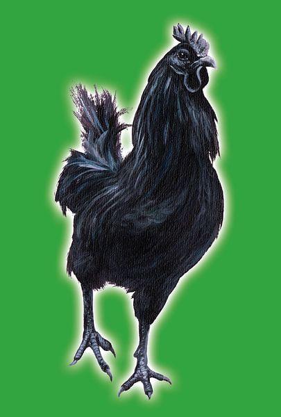 Big Black Cock (grote zwarte haan) van Studio Fantasia