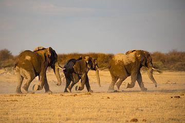 Olifanten in Nxai Pan van Marieke Funke