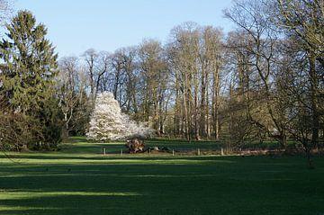 Bruid in het park van Kris Gevaert