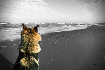 German Shepperd on the beach von Toekie -Art