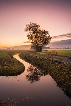Boom allein von Moetwil en van Dijk - Fotografie