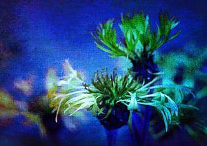 Kornblumen im blauen Licht
