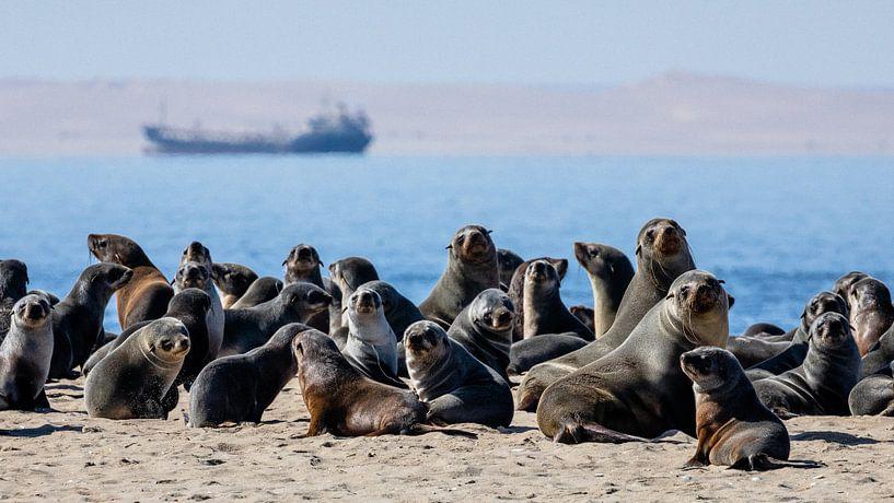 Kolonie pelsrobben / zeehonden bij Walvisbaai, Namibië van Martijn Smeets