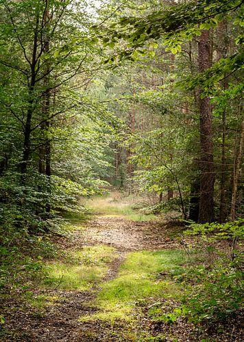 Doorkijkje bospad Lage Vuursche (Landgoed Pijnenburg)