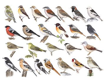 Zangvogels van Nederland van Jasper de Ruiter