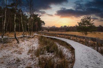 In een koud bos bij zonsondergang
