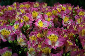 Bloemen nr 5