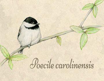 Carolinamees illustratie van Bianca Wisseloo