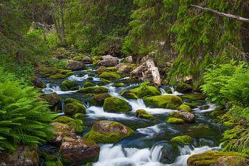 Parc national de Fulufjället (Suède) sur Albert de Vries