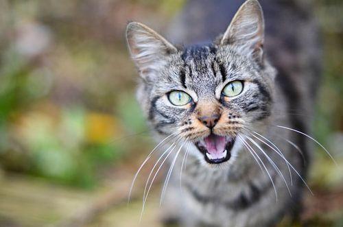 Wilde kat van Christopher Lewis