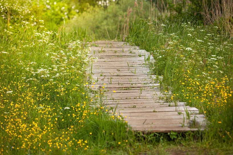Pont dans la nature sur Special Moments MvL