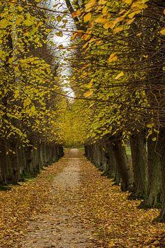 Herfst van Irene Lommers