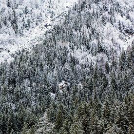 Winterbos in de bergen van Frank Herrmann