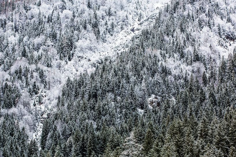 Forêt d'hiver dans les montagnes sur Frank Herrmann