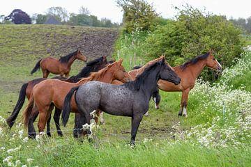 Pferde von Henk de Boer