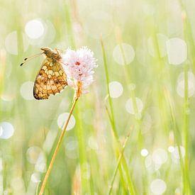 Purperstreepparelmoervlinder in de Eifel van Francois Debets