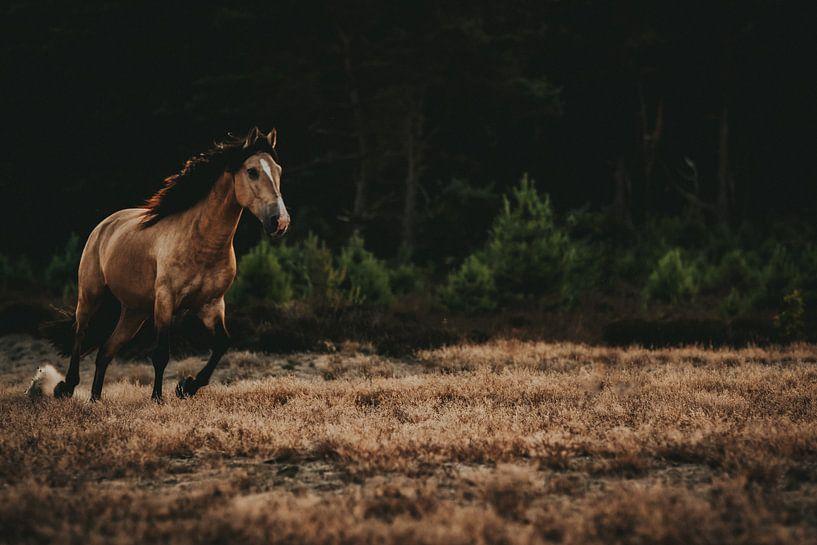 Wilde paard van Michelle LaSanto
