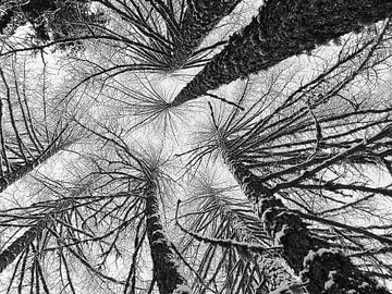 Schneebedeckte Bäume von Menno Boermans