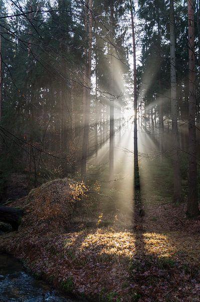 Winterlicht im Wald 3 von Adriana Mueller