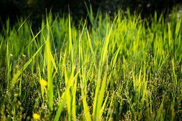 Gras an einem heißen Sommertag von Marcel Alsemgeest