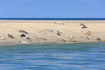 Rustende zeehonden op zandbank in Waddenzee van Anja Brouwer Fotografie
