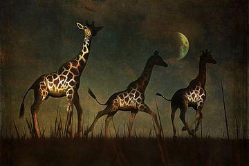 Dierenrijk – Giraffen op de vlucht