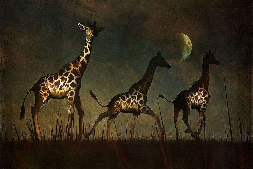 Tierreich  – Giraffen fliehen von Jan Keteleer