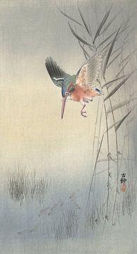 Eisvogel jagt Fische aus Ohara Koson