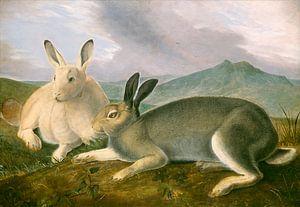 Noordpool Hazen, John James Audubon
