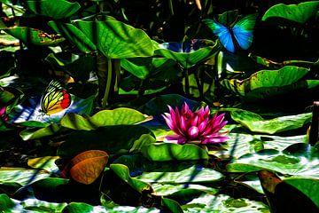 Schmetterlinge Seerose Traumgarten von ellenilli .