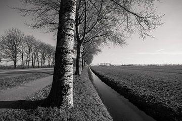 Niederländische Perspektive von Bert-Jan de Wagenaar