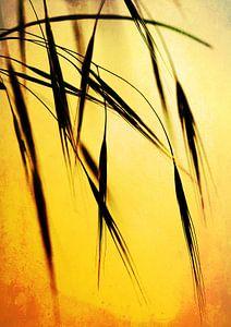 Grass in the evening sunlight