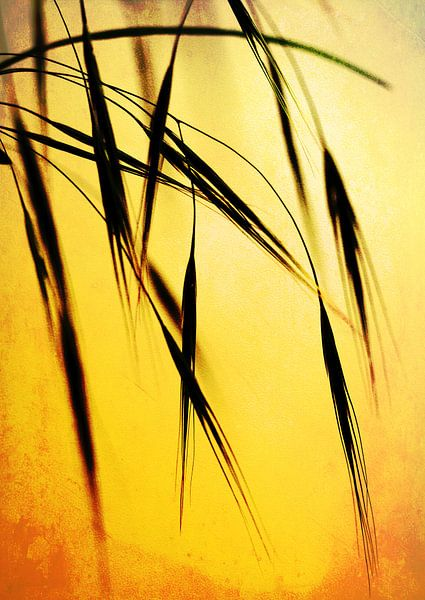 Grass in the evening sunlight van Rosi Lorz