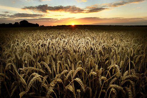 Wheat field von Luuk van der Lee