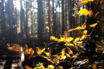 Licht im Wald von Henk Elshout