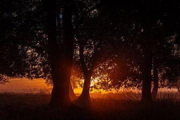 Zonsopkomst achter bomen op het Dwingelderveld