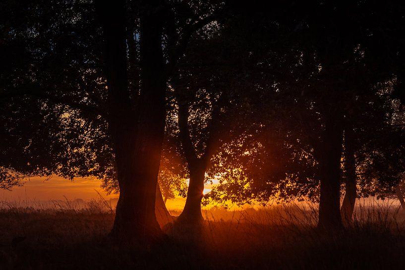Zonsopkomst achter bomen op het Dwingelderveld sur Anneke Hooijer
