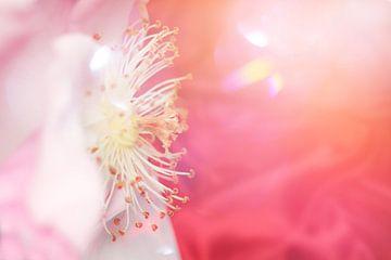 pink velvet flower sur Ribbi The Artist